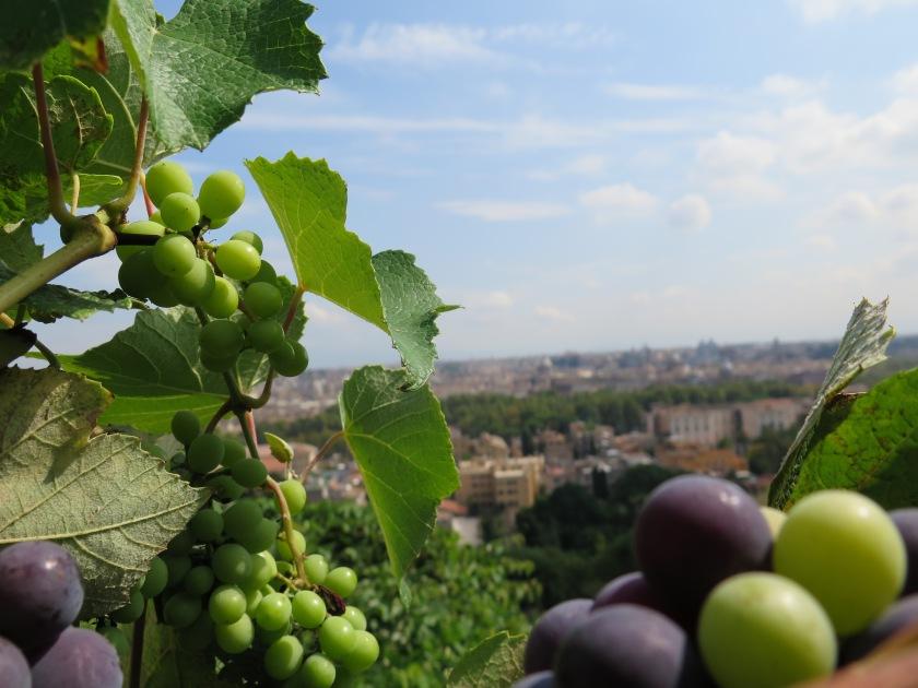 Kypsyvien viinirypäleiden huumaava tuoksu houkuttelee istahtamaan lehtimajan varjoon