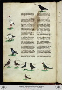 Kuva 3. Ilmeisesti kauluskaija  Fredrik II Hohenstaufilaisen haukkametsästyskirjassa. Lintu äärimmäisenä oikealla. Kuvassa teksti Psittacus viridis.