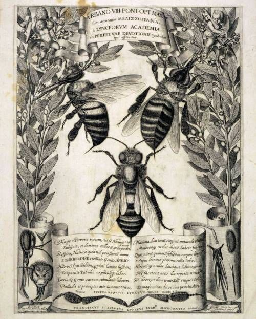 Melissographia